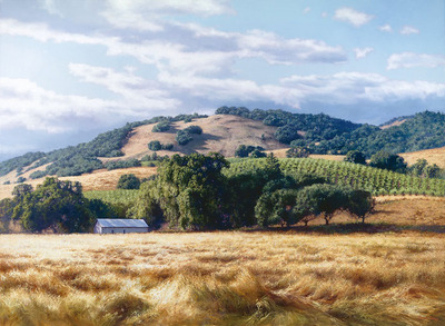 California Wine Country- Signed By The Artist – CanvasGiclee  – Limited Edition  – 25S/N  –  34x25