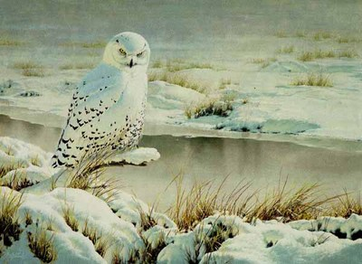 Rare Visit – Snowy Owl- Signed By The Artist – PaperLithograph – Limited Edition – 950S/N – 19x26