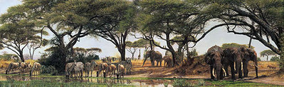 African Oasis- Signed By The Artist – PaperLithograph – Limited Edition – A/P – 18 7/8x50