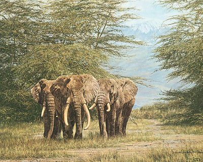 Amboseli Ancients- Signed By The Artist								 – Paper Lithograph – Limited Edition – 1000 S/N – 18 1/2 x 23 1/4
