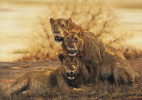 Hot Lions- Signed By The Artist								 – Canvas Giclee – Limited Edition – A/P – 20 5/8 x 30