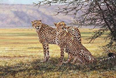 Imminent Pursuit- Signed By The Artist								 – Paper Lithograph – Limited Edition – 550 S/N – 19 x 26