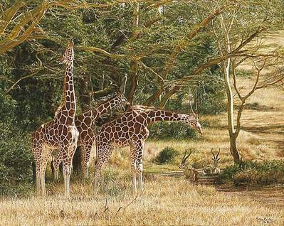 Tall Shadows- Signed By The Artist – PaperLithograph – Limited Edition – 850S/N – 25 1/4x30 3/4