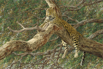 Chui- CanvasGiclee – Limited Edition – 50Numbered – 20x30