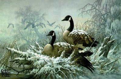 April Snow – Canada Geese- Signed By The Artist								 – Paper Lithograph – Limited Edition – 76 A/P – 14 3/8 x 22