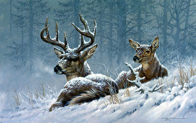 Bedded Down – Whitetail Deer- Signed By The Artist – PaperLithograph  – Limited Edition  – 76A/P  –  10x16