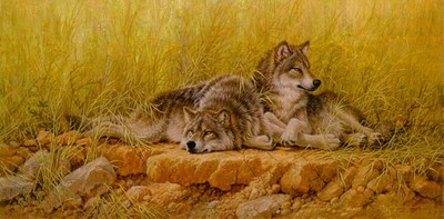 End Of Summer – Gray Wolves- Signed By The Artist – CanvasGiclee  – Limited Edition  – 180S/N  –  20x40