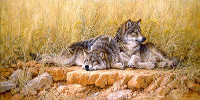 End Of Summer – Gray Wolves- Signed By The Artist – PaperLithograph  – Limited Edition  – 950S/N  –  16 1/4x32 1/2