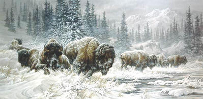 Front Range Storm – Colorado Buffalo- Signed By The Artist – CanvasLithograph  – Limited Edition  – 36A/P  –  16x32
