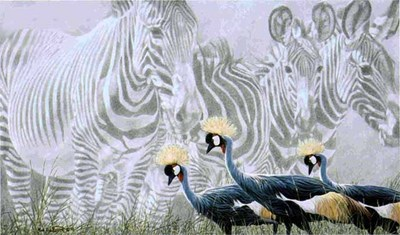 Zebra Mirage- Signed By The Artist								 – Paper Giclee – Limited Edition – 250 S/N – 17 1/4 x 30