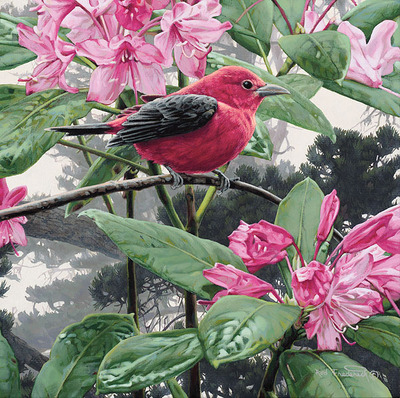 Scarlet Tanager- Signed By The Artist								 – Canvas Giclee – Limited Edition – 75 S/N – 8 x 8