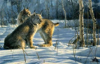 Lynx Light- Signed By The Artist – CanvasLithograph – Limited Edition – 250S/N – 20x30 –