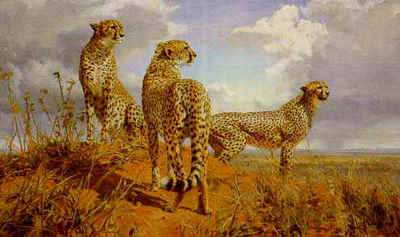 Cheetah Trio- Signed By The Artist								 – Paper Lithograph – Limited Edition – 950 S/N – 19 1/2 x 32 1/2