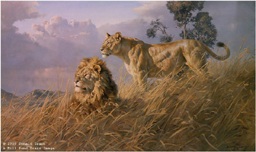 African Evening – Lions- Signed By The Artist – PaperLithograph – Limited Edition – 950S/N – 19 1/2x32 1/2