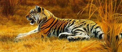 Golden Dawn – Young Tiger- Signed By The Artist – PaperLithograph  – Limited Edition  – 950S/N  –  14 1/8x32 3/8
