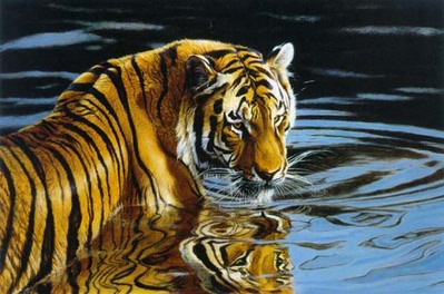 Reflections – Tiger In Water- Signed By The Artist – PaperLithograph  – Limited Edition  – 495S/N  –  20x30