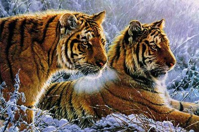Siberian Gold- Signed By The Artist – CanvasLithograph  – Limited Edition  – 75S/N  –  28 1/2x20  –