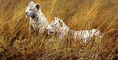 Waiting- Signed By The Artist – PaperLithograph  – Limited Edition  – 950S/N  –  14 3/8x28