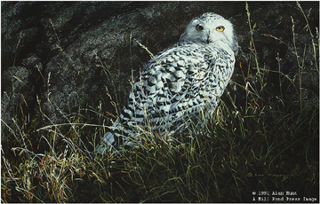 Arctic Knight – Snowy Owl- Signed By The Artist – PaperLithograph  – Limited Edition  – 1250S/N  –  15 1/8x22