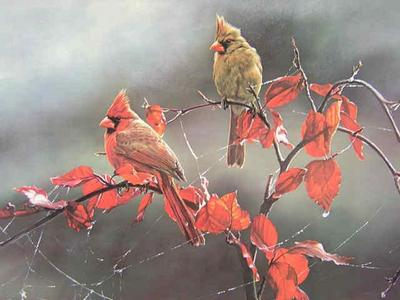 Morning Jewels – Cardinals- Signed By The Artist – PaperLithograph  – Limited Edition  – 750S/N  –  13 1/2x21 3/4