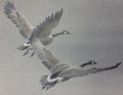 Mill Pond – Canada Geese – Lithograph- Signed By The Artist – PaperLithograph – Limited Edition – 20A/P – 7x9