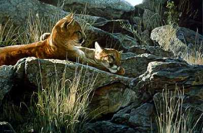 Afternoon Light – Cougar- Signed By The Artist – PaperLithograph  – Limited Edition  – 950S/N  –  19x23 3/8  –