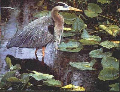After The Rain – Great Blue Heron- Signed By The Artist								 – Paper Lithograph – Limited Edition – S/N – 15 1/8 x 19 –