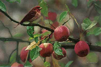 Apple Time – Purple Finch- Signed By The Artist – PaperLithograph  – Limited Edition  – 76A/P  –  8 1/2x12 5/8