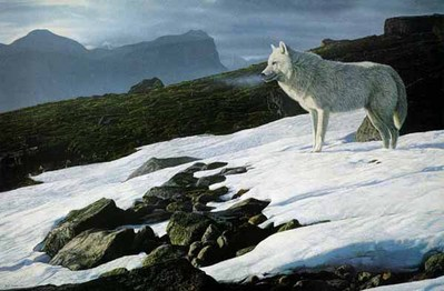 Arctic Light – Arctic Wolf- Signed By The Artist – PaperLithograph  – Limited Edition  – 950S/N  –  20 1/2x31 5/8