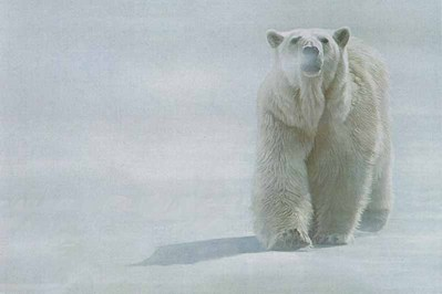 Face-Off – Polar Bear- Signed By The Artist – CanvasGiclee – Limited Edition – 10A/P – 40x60