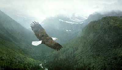 Into The Mist – Bald Eagle- Signed By The Artist – PaperLithograph – Limited Edition – S/N – 19x32 1/2