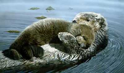 Rockabye Sea Otter- Signed By The Artist – PaperLithograph – Limited Edition – S/N – 11 1/2x19 1/8