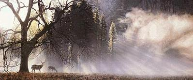 Yosemite Dawn- Signed By The Artist – PaperLithograph – Limited Edition – 950S/N – 13 3/4x32 1/2