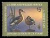 JDS 12 – 2004 Fulvous Whistling Duck Adam Nisbett