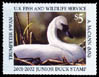 JDS 9 – 2001 Trumpeter Swan Aremy McCann