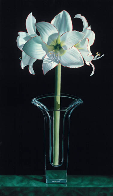 Grande Amaryllis- Signed By The Artist								 – Canvas Giclee – Limited Edition – 180 S/N – 35 x 20