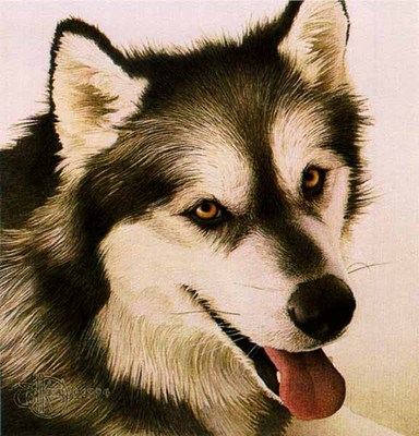 Alaskan Malamute- Signed By The Artist – PaperLithograph – Limited Edition – 1000S/N – 8 3/4x8 3/4