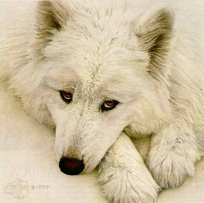 Samoyed- Signed By The Artist – PaperLithograph  – Limited Edition  – 1000S/N  –  8 3/4x8 3/4