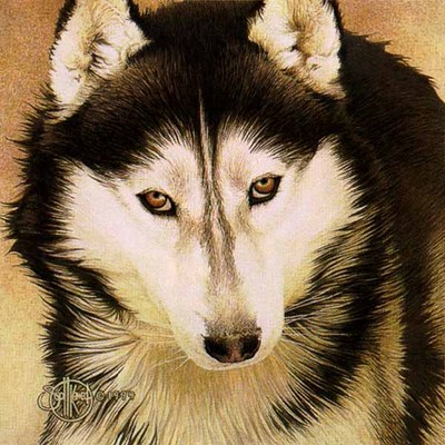 Siberian Husky- Signed By The Artist – PaperLithograph  – Limited Edition  – 1000S/N  –  8 3/4x8 3/4