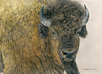 Slow Bull- Signed By The Artist – CanvasGiclee – Limited Edition – 200S/N – 16x22