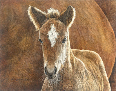 Wild In The Country- Signed By The Artist – CanvasGiclee – Limited Edition – 150S/N – 11x14