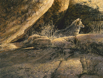 Coyote Afternoon- Signed By Andrea Lyman – CanvasGiclee – Limited Edition – 100S/N – 12x9