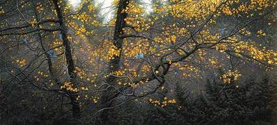 Steller Autumn- Signed By Andrea Lyman – CanvasGiclee – Limited Edition – 10A/P – 19x42 –