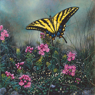 Swallowtail Butterfly And Pink Mountain Heather- Signed By Andrea Lyman								 – Canvas Giclee – Limited Edition – 100 S/N – 9 1/2 x 9 1/2