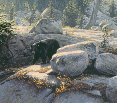 Boulder Bruin- Signed By Andrea Lyman								 – Canvas Giclee 								 – Limited Edition 								 – 100 S/N 								 –  								12 x 14