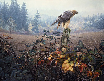 The Raptor's Watch- Signed By Andrea Lyman								 – Canvas Giclee – Limited Edition – 248 S/N – 28 x 36