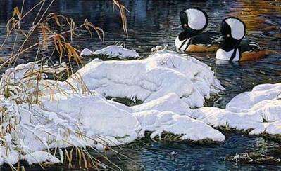 Hooded Mergansers- Signed By The Artist – PaperLithograph – Limited Edition – 500S/N – 14 1/2x24