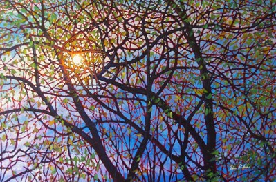 Sun In The Willows- Signed By The Artist – CanvasGiclee  – Limited Edition  – 10A/P  –  30x45