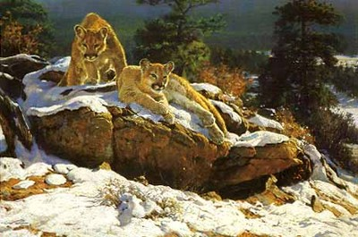 Rocky Mountain Cougars- Signed By The Artist – PaperLithograph  – Limited Edition  – 750S/N  –  20x30