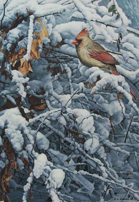 Cardinal In The Brambles- Signed By The Artist – PaperLithograph – Limited Edition – 950S/N – 18 3/4x13 1/4